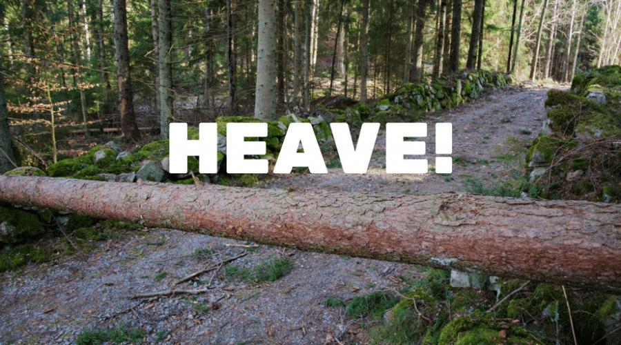 Servant-Leaders Lift Trees